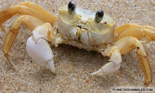 crustaceoszfghsfd